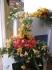 Otmuchów - święto kwiatów :: Otmuchów - święto kwiatów